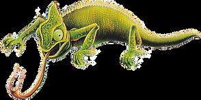Footer_Chameleon.png