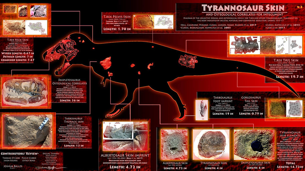 This chart collects all currently published information on tyrannosaurid skin coverings.