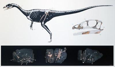 Factoid of the Week                    Paleontology Newsflash: Dracoraptor hanigani