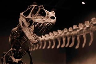 Ceratosaurus 01 web res.jpg