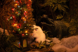 Christmas Crocodile 01 web.jpg
