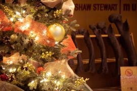 Christmas Tree Ontogenetic series 01 web