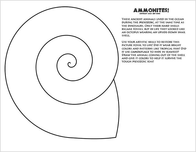 Ammonite coloring page.JPG
