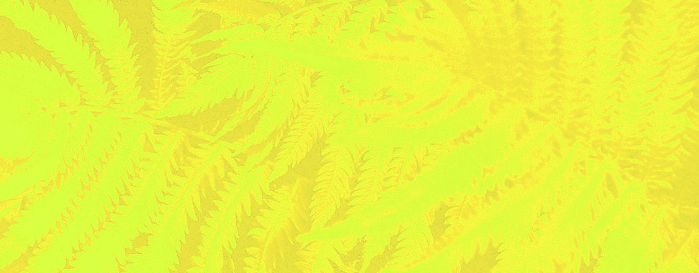 Fern header 03 exciting yellow.jpg
