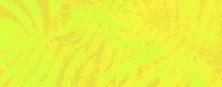Fern header 03 exciting yellow.jpg