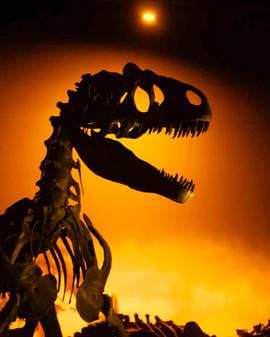 Allosaurus Dark web res.jpg