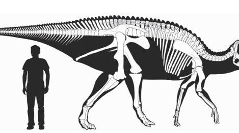 Guest Factoid: Prosaurolophus