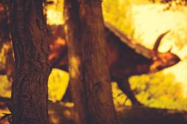 Titanoceratops behind trees web res.jpg