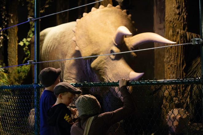 Family Triceratops animatronic.jpg