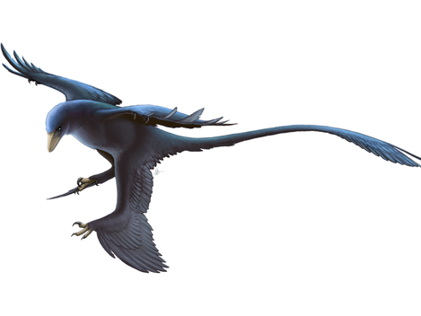 Exhibit Spotlight: Microraptor zhaoianus