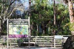 Corkscrew Swamp Sanctuary.JPG