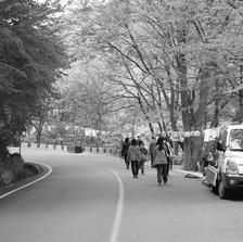 마곡사 야유회의 한 풍경