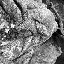 봄날의 양지꽃