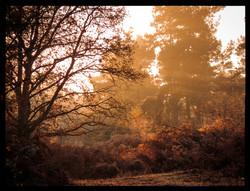 Misty December Morning