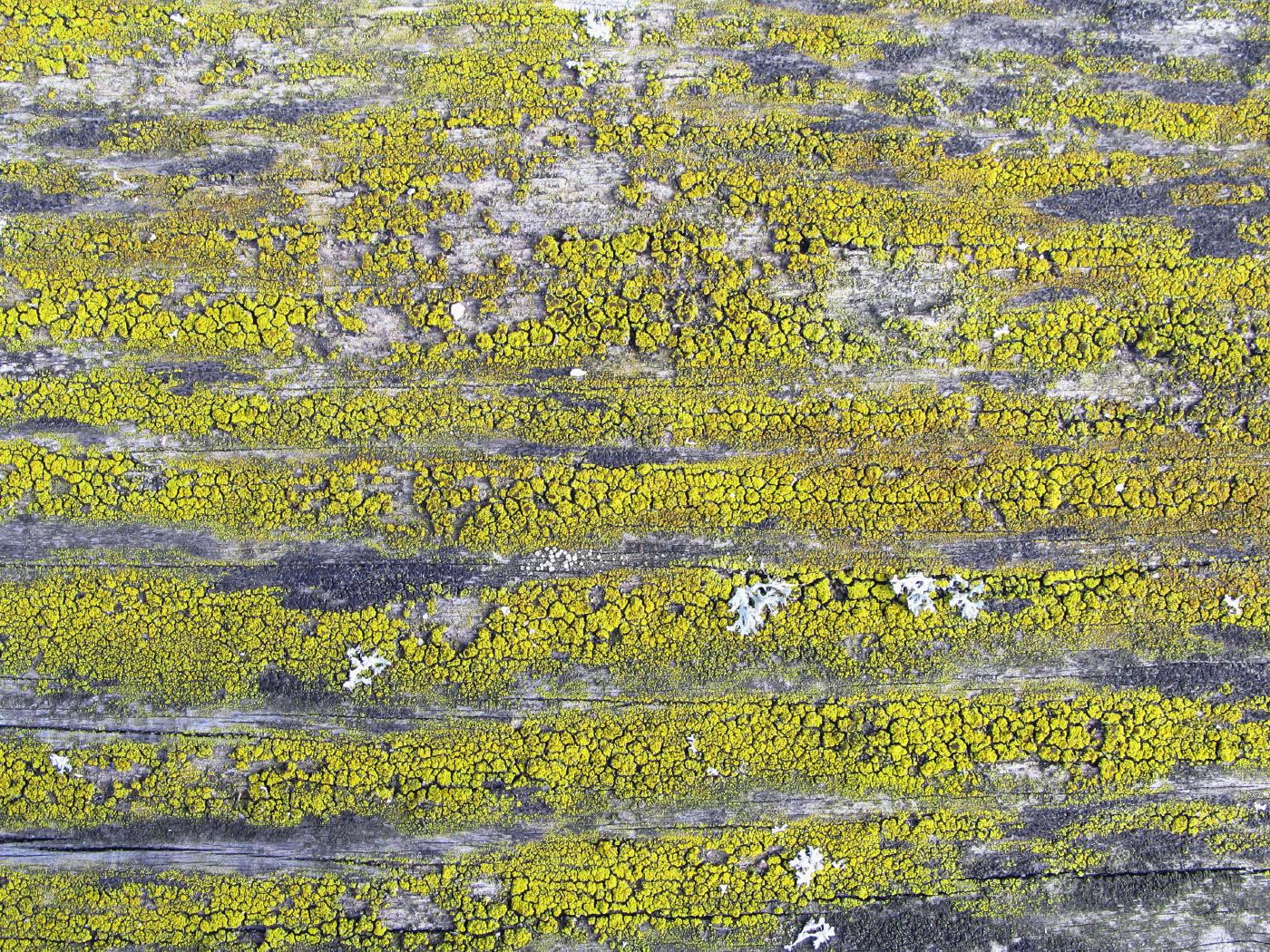 Lichen In Lines