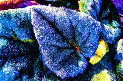 Wintry Leaves