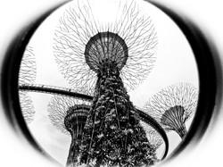 Arboreal Future