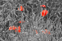Glimpses of Red