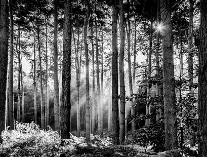 Tunstall Rays_Sue Garrod.jpg