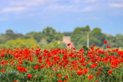 Playford Poppies on Lockdown Walk