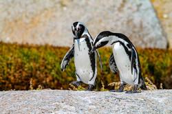 Walking Talking Penguins