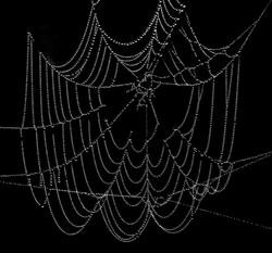 Dewdrop Cobweb