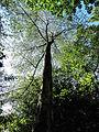 Tree Gazing_Ann Stammers.jpg