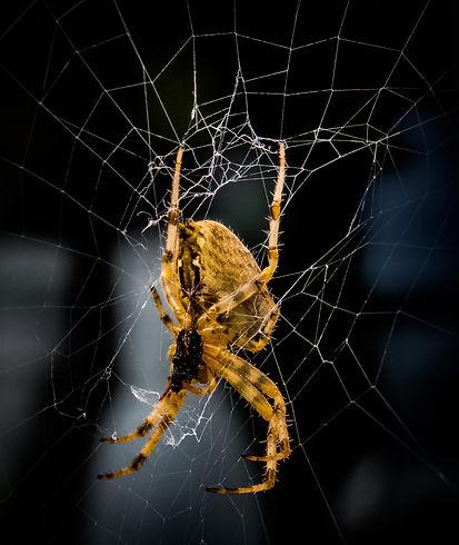 Arachnophobia_Sue Garrod.jpg