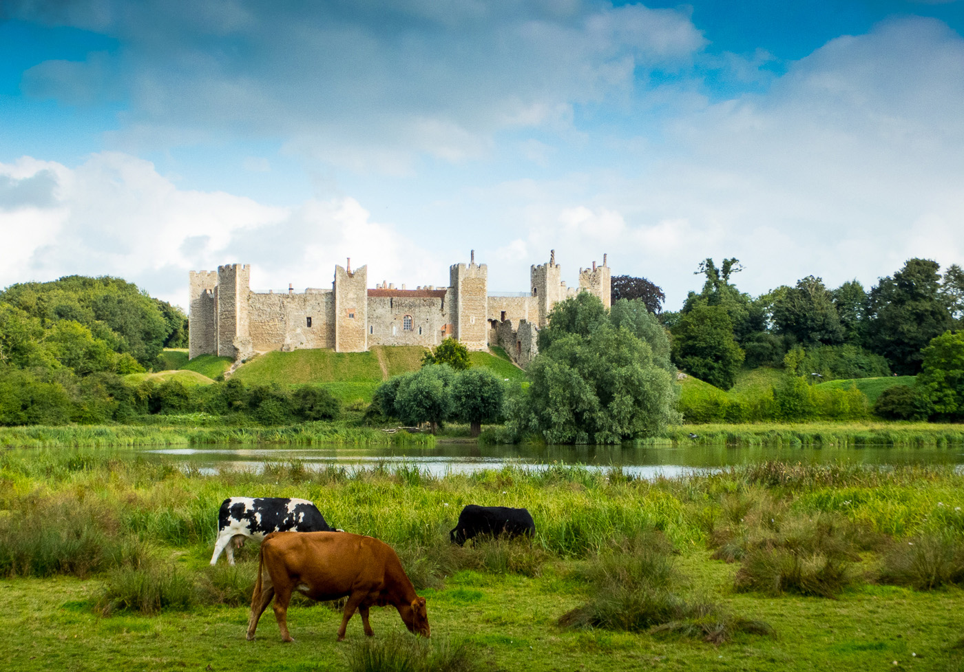 Castle and Cows