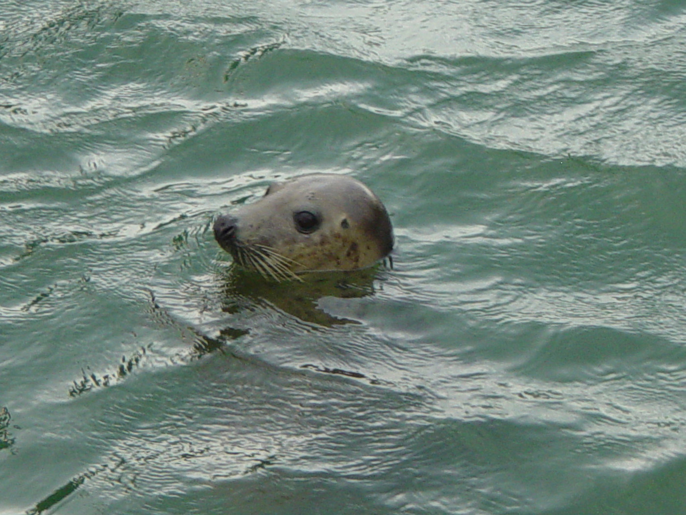 Friendly Seal
