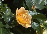 Blooming Orford_Steve Springett.jpg