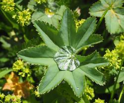 Captured Rain Droplet
