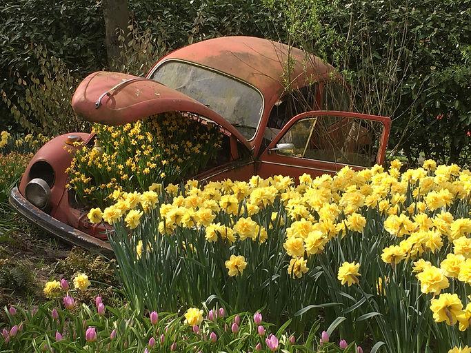 Dead Bug by Ann Nunn