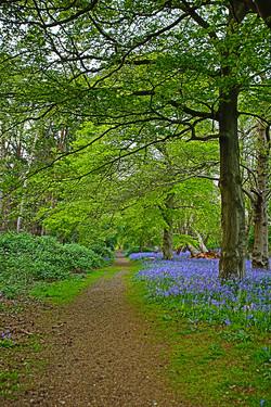 Sutton Hoo in Blue