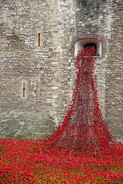 Poppy Installation, Tower of London