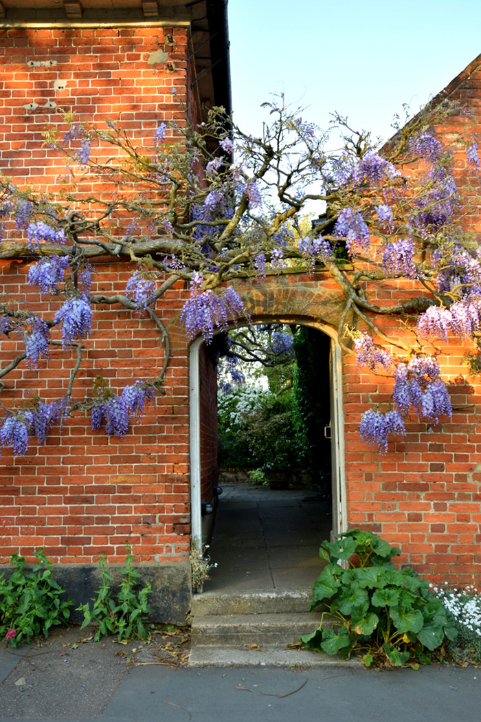 Whispering Wisteria
