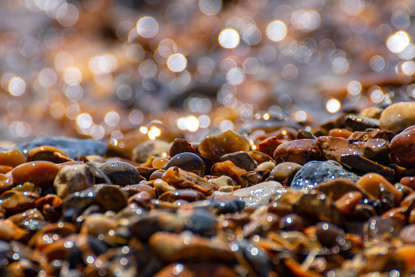 Sparkling Sunlit Shoreline
