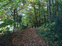 Autumn Approach