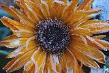 Tangerine Dream_Barry Jones .jpg