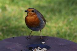Robin's Grubby Lunch