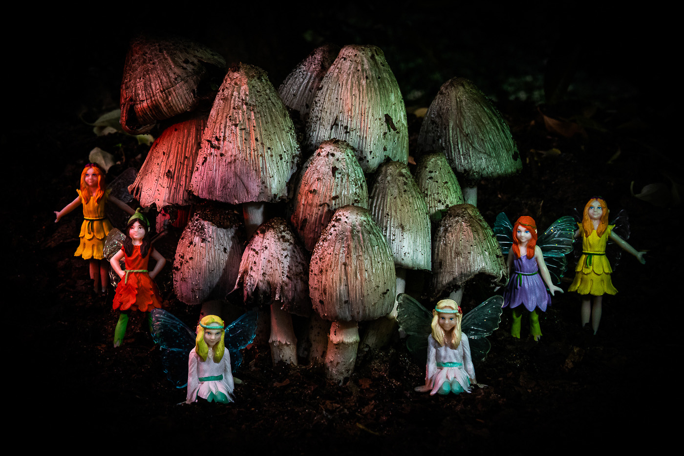 At Home with the Fairies