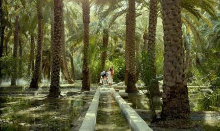Al Ain Oasis.jpg