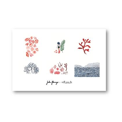 Cartes postales Algues Mlle Jane Dos - Julie Flamingo