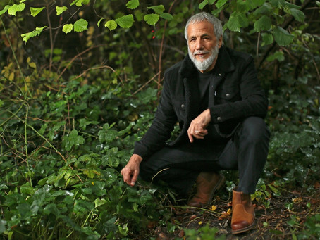 Cat Stevens reimmagina Tea for the Tillerman per il suo 50° anniversario