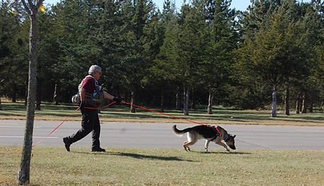 minnesota K9 northstar search and rescue