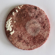 Nidiya Ceramic Micro Fungus 8.png