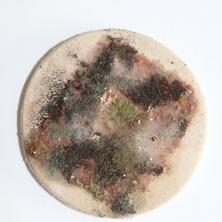 Nidiya Ceramic Micro Fungus 11.png