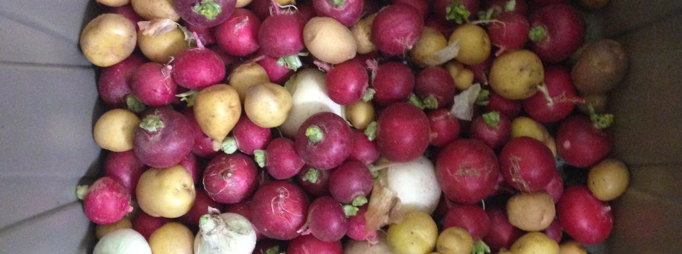 Sheila Bird Donation Potatoes.jpg