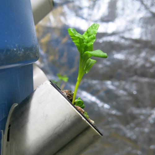 Aeroponic barrels plant sprouting foil.j