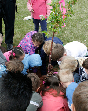 2011 Planting an Apple Tree at Indian Pa